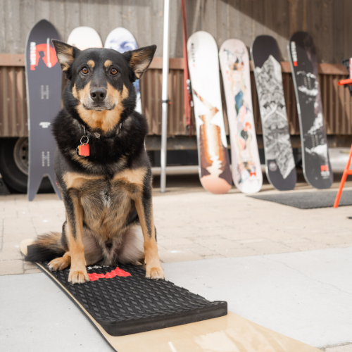 Gravity Haus Breckenridge Hotel - Dog Friendly Hotel - 1