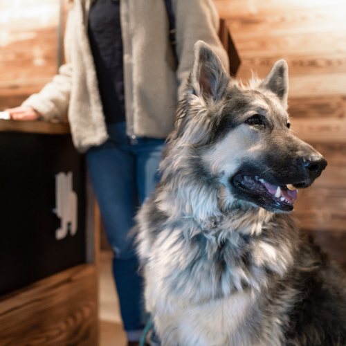 Gravity Haus Breckenridge Hotel - Dog Friendly Hotel - 3